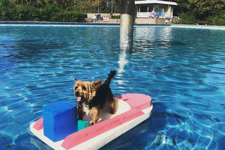 Hundeschwimmen – auch für Nichtschwimmer